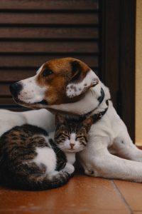 dog and cat sleeping