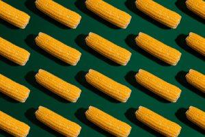 corn on green background